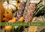 Holiday Cards - Thanksgiving Collection - Harvest of Thanks