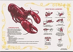 Paper Placemats - How To Eat A Lobster