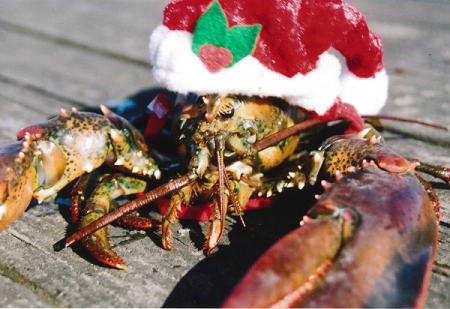 Holiday Cards - Regional Christmas Collection - Santa Lobster is Watching