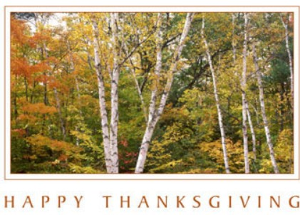 Holiday Cards - Thanksgiving Collection - Woodland Thanksgiving